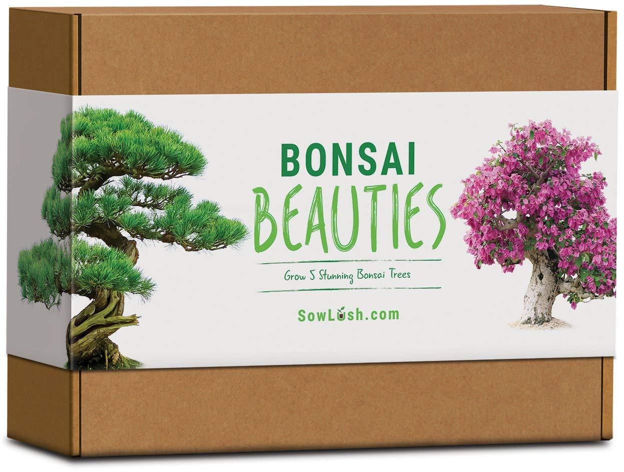 Bonsai Beauties Gift Seed Kit Sowlush